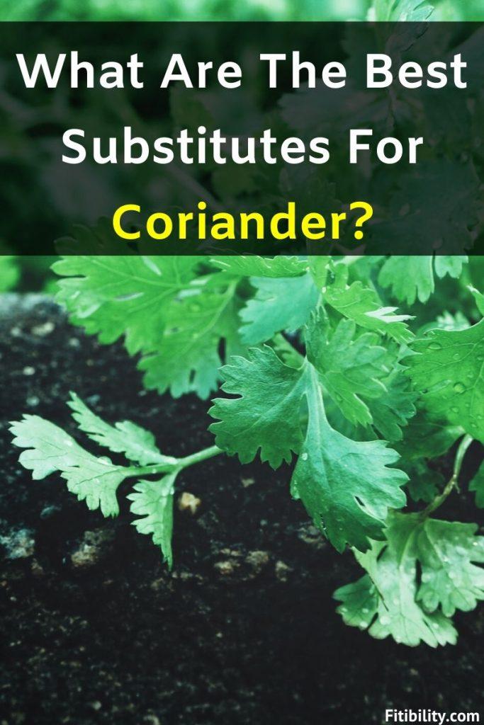 cilantro substitute