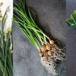 Chives vs Green Onions vs Scallions: What Are They and How To Use