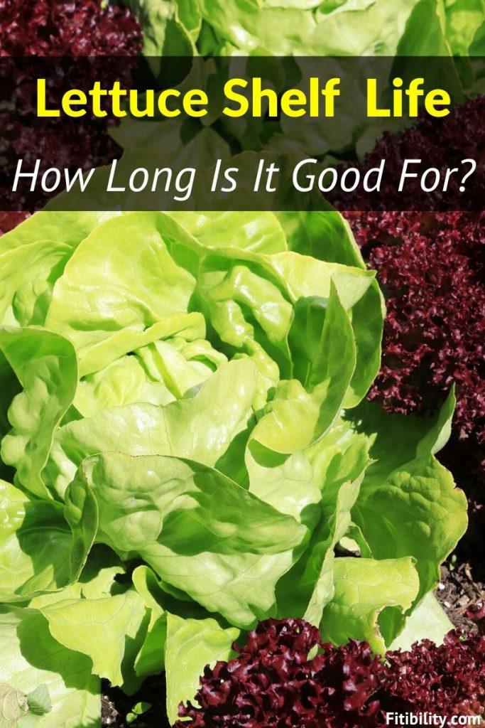 lettuce shelf life
