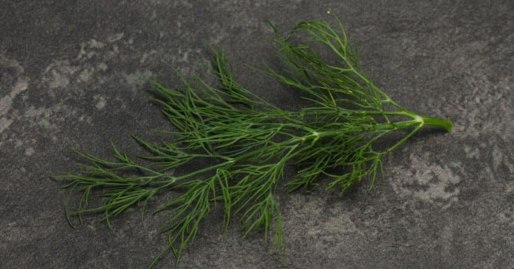 dill substitutes